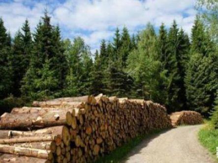 新西兰与中国签署一项协议,为未来两国林业合作铺平道路镀镍铜线